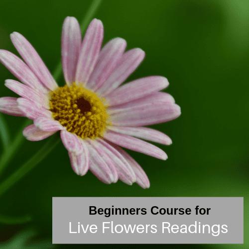 Live flower readings - The Basics