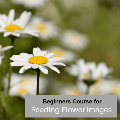 Basic course in Reading Flower Images
