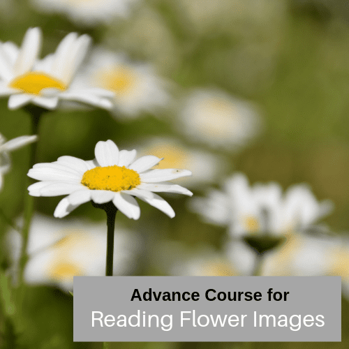 Advanced Reading Flower Images