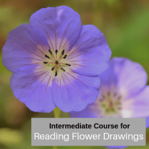Intermediate course for reading flower drawings