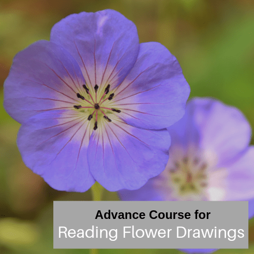 Advanced Reading Flower Drawings