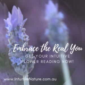 Purple Lavender for Intuitive Flower Readings