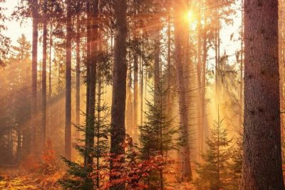 forest heat by sunbeam Intuitive Trees